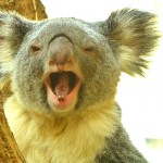 オーストラリアが中国人を「おもてなし」