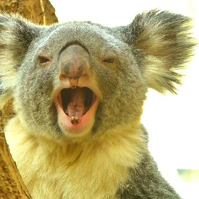 オーストラリアの不動産を「爆買い」する中国人 19億円の投資で「永住権」も得る