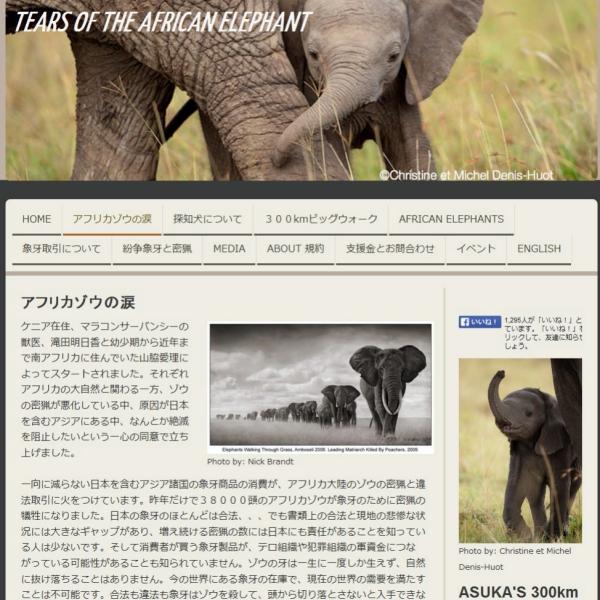中国の「象牙ブーム」がイスラム過激派の資金源に 密猟を取り締まる日本人女性の怒り