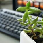 植物を見たらアイデアが浮かぶかも