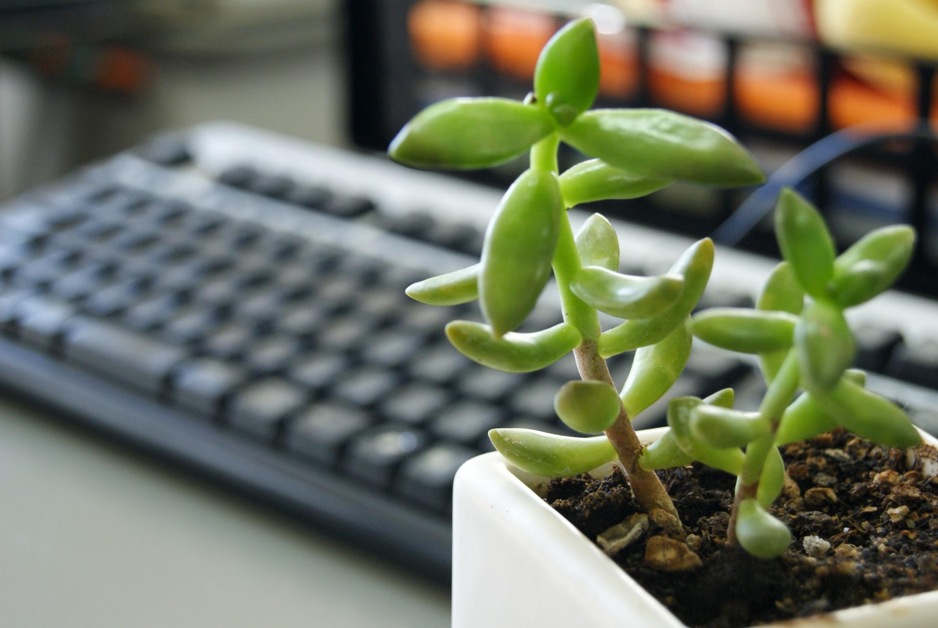 職場のストレスを解消する5つの方法 机の上に「自分の好きなもの」を置いてみよう!