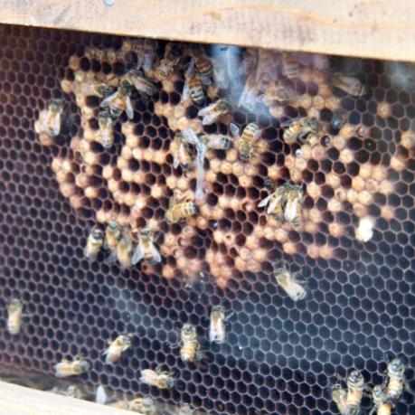 好きな動物のトップが「働き蜂」だと? アメリカ人が「仕事中毒」に陥っている!