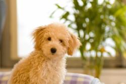 愛犬を盛大にお祝いしよう!