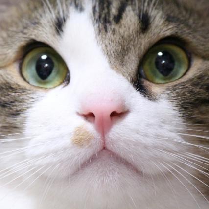 ペットを飼うなら断然犬より猫がいい理由 自分を高め、他人に寛大になれる効果も