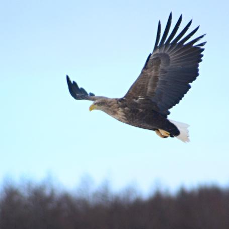 マツコ・デラックスが「名前負け」のリスクを語る 「だって大きく翔ぶって書いてヒロトでしょ?」
