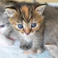 たしかに猫はかわいいけど……