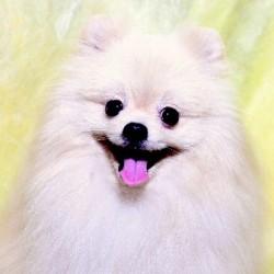 犬が可愛くないなんて、信じられない!