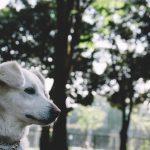 高齢化は飼い犬にも進んでいる。