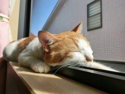猫にはのびのび暮らしていただきたい