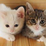 地域猫を保護するボランティアの多くは自費で活動しているそうです