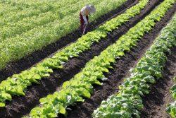 外国人農業支援人材