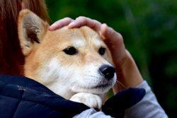 ペットの避難所を設置