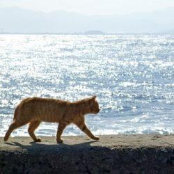 猫の島、全猫に不妊・去勢手術実施