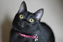 黒猫はインスタ映えしなから捨てられる?