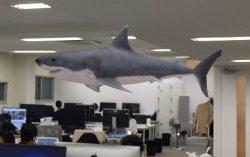 職場をゆうゆうと泳ぐサメ
