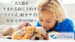 犬猫の殺処分ゼロを目指すサイト開発のCF開始