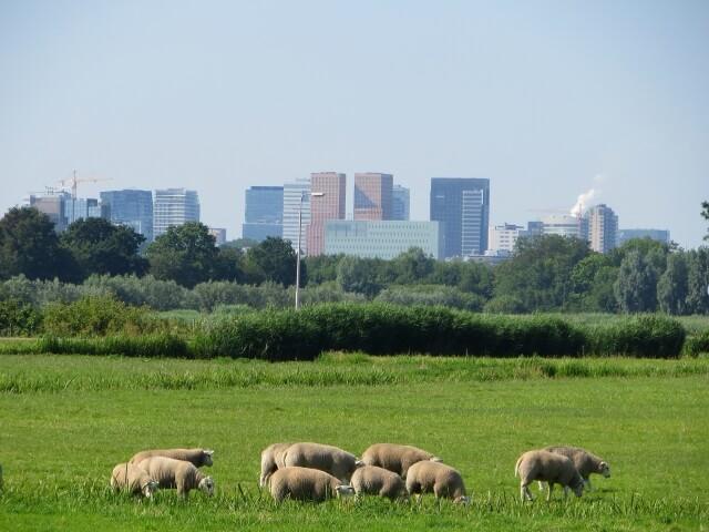 便利な「都会」?それとも自然の「田舎」?