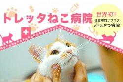 月額定額制で猫の往診と予防医療行うサービス