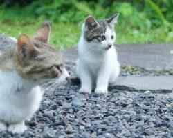 野良猫の餌付けはダメ