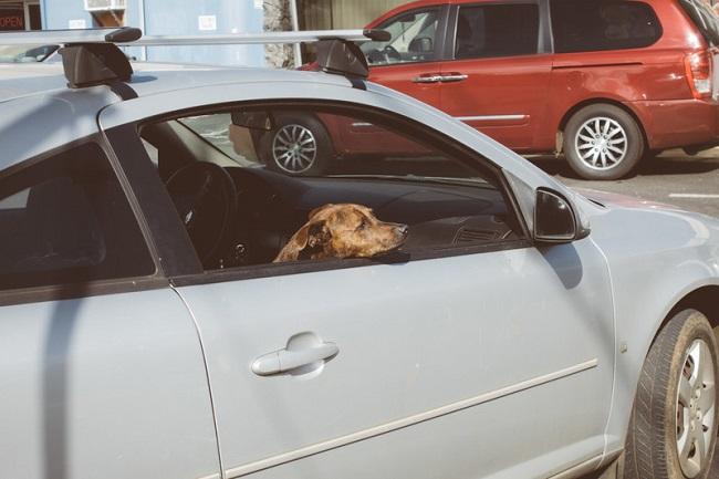 「車に忘れた!」