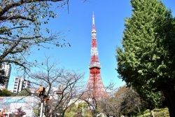 東京タワー派?スカイツリー派?