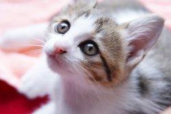 好きな猫のキャラクターランキング、1位は?