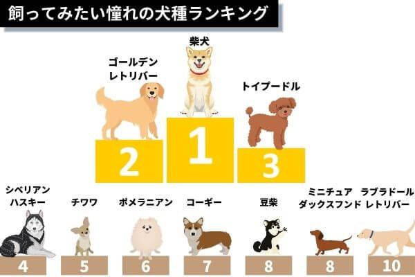 憧れの犬種ランキング
