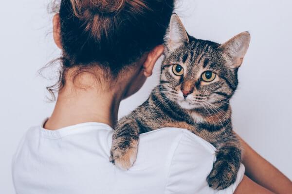 賃貸で保護猫と暮らす